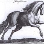 Il cavallo Napoletano: una storia favolosa