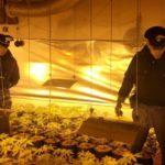 """""""L'erba di Grace"""" a Somma Vesuviana: coltivavano la marijuana nella serra di casa"""