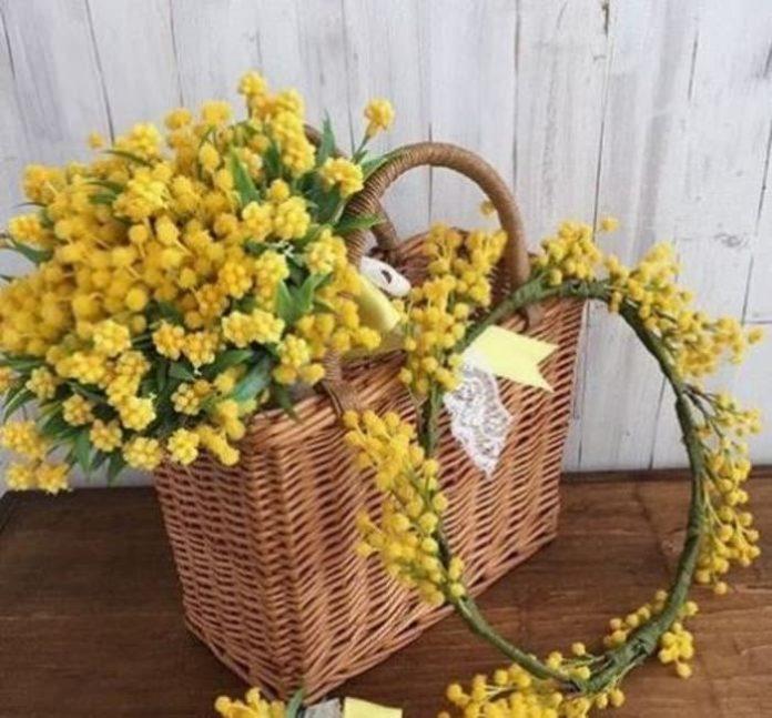 La Mimosa: il fiore dell'8 marzo (source: Pinterest )