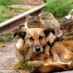 Campania, una legge per gli animali