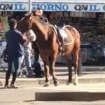 Controlli anti-contagio, a spasso per Giugliano con la capretta e il cavallo: denunciato