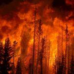 Protezione civile Campania: incendi boschivi aumentati e non si tratta di autocombustione