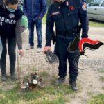 Campania, operazione anti bracconaggio dei carabinieri forestali: sequestri e 2 denunce
