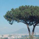 Napoli, approvata la delibera: cinque milioni di euro per gli alberi della città