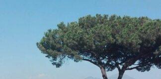 alberi-napoli
