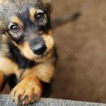 Napoli, via al programma itinerante di anagrafe canina: il calendario
