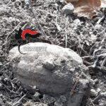 Bomba a mano della Seconda Guerra Mondiale nelle campagne di Visciano: intervengono gli artificieri