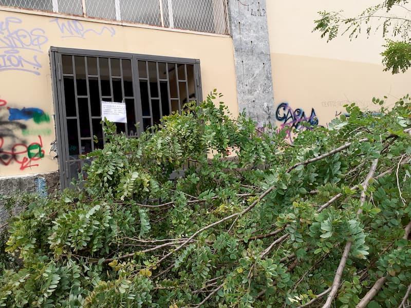 Napoli, crolla un ramo al Sannazaro: chiuso uno dei 7 varchi di ingresso
