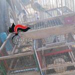 Napoli, intrappolava uccelli protetti: denunciato