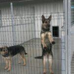 (Video) Napoli, inaugurato il nuovo centro di accoglienza cani
