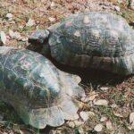 Poggiomarino, tartarughe a rischio estinzione in area adiacente officina abusiva: denunciato 57enne