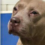Pomigliano, cane malnutrito ed esposto alle intemperie: denunciata 48enne