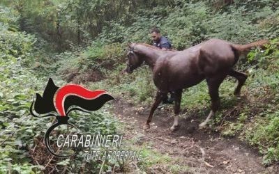 Ottaviano, cavallo imbizzarrito fugge tra la gente e finisce in un dirupo